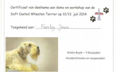 Workshop 'Soft Coated Wheaten Terrier'