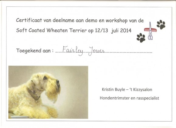 Workshop 'Soft Coated Wheaten Terrier'